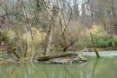Natürlicher kleiner See in einem Park mit gezogenen Seilen lizenzfreie stockfotografie