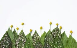 Natürlicher Konzepthintergrund des frischen Blattes mit gelber Blumenanordnung Stockbilder