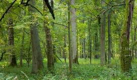 Natürlicher laubwechselnder Wald Lizenzfreie Stockfotos