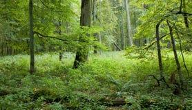 Natürlicher laubwechselnder Wald Stockfotos