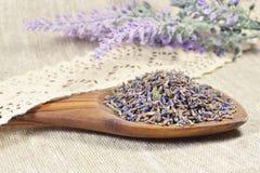 Natürlicher Lavendel in einem hölzernen Löffel Lizenzfreie Stockfotografie