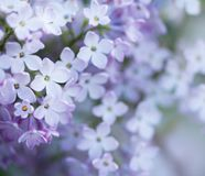 Natürlicher lila Hintergrund Stockbilder