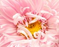 Natürlicher Makroblumenhintergrund lizenzfreie stockbilder