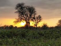 Natürlicher pic, Sonnenlicht stockbild