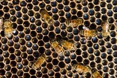 Natürlicher reiner Honig Lizenzfreies Stockfoto