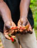 Natürlicher roter Lippenstift auf Sansibar Stockfotos
