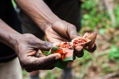 Natürlicher roter Lippenstift auf Zanzibar Stockbild