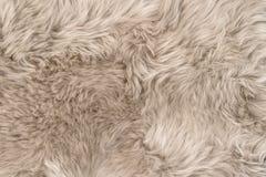 Natürlicher Schaffellwolldeckenhintergrundbeschaffenheits-Schafpelz Stockbilder