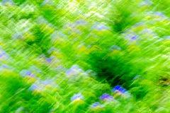 Natürlicher Sommer verwischte draußen bokeh Hintergrund mit bokeh des grünen Grases, der blau-gelben Blumen und der Sonnenstrahle Lizenzfreie Stockfotos