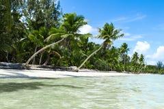 Natürlicher Strand mit Palmen Stockfotos