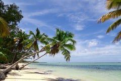 Natürlicher Strand mit Palmen Lizenzfreie Stockfotografie
