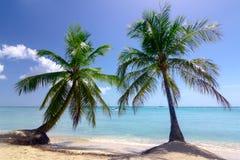 Natürlicher Strand mit Palmen Stockfotografie