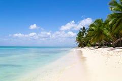 Natürlicher Strand mit Palmen stockbild