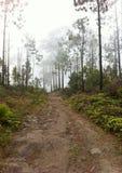 Natürlicher Sumpfgebietmittenebel lizenzfreie stockbilder
