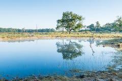 Natürlicher Teich an einem windstillen Sommertag Lizenzfreie Stockfotografie