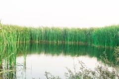Natürlicher Teich in Thailand Lizenzfreies Stockbild
