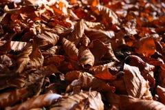 Natürlicher Teppich der Herbstblätter Stockbild