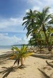 Natürlicher tropischer Strand Stockbild