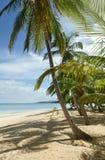 Natürlicher tropischer Strand Lizenzfreie Stockfotos