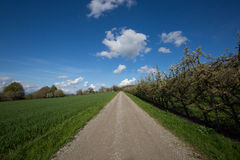 Natürlicher Weg, grünes Gras und blauer Himmel mit Wolken Stockfotografie