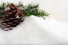 Natürlicher Winterhintergrund mit Kegel Lizenzfreie Stockbilder