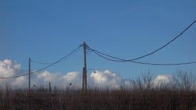 Natürlicher Zaun mit den geschwollenen Wolken, die vorbei überschreiten stock video footage