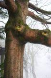 Natürliches Baum-Gesicht Lizenzfreies Stockfoto