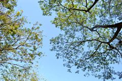 Natürliches Baumblatt stockfotos
