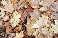 Natürliches Baumlaub des Herbstes Lizenzfreies Stockbild