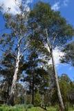 Natürliches Busch forost Stockbilder