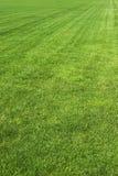 Natürliches Feld des grünen Grases Stockfotografie