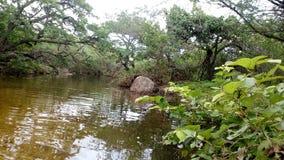 Natürliches Flusswasser Lizenzfreies Stockbild