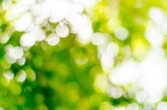 Natürliches Freien bokeh in den grünen und gelben Tönen Stockfotografie