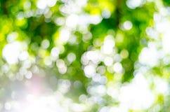Natürliches Freien bokeh in den grünen und gelben Tönen Stockbilder
