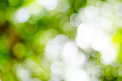Natürliches Freien bokeh in den grünen und gelben Tönen Stockbild