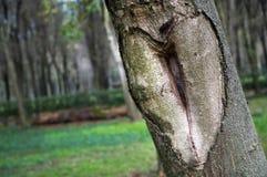 Natürliches geschnitztes Liebes-Herz Stockbild