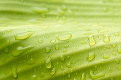 Natürliches Grün mit Wassertropfen Stockfoto