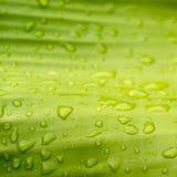 Natürliches Grün mit Wassertropfen stockfotografie