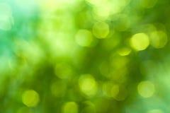 Natürliches Grün unscharfer Hintergrund Lizenzfreies Stockbild