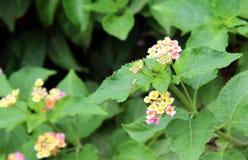 Natürliches grünes Blatt und Blumen Stockfotos