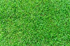 Natürliches grünes Gras im Garten Stockfotos