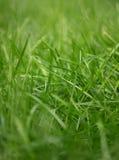 Natürliches Gras Stockbild