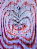Natürliches hölzernes Herzen texutre in der wirklichen Farbe Stockfoto
