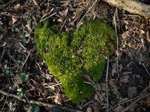 Natürliches Herz aus Moos. Natürliches Herz aus Moos mitten im Wald stock photo