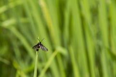 Natürliches Insekt Stockfotos