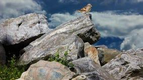 Natürliches Leben und Tiere auf dem Gebiet stock footage