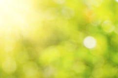 Natürliches Licht bokeh Lizenzfreies Stockbild