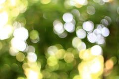 Natürliches Licht natürliches bokeh im Hintergrund oder im Text Lizenzfreie Stockbilder