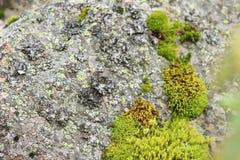 Natürliches Moos auf Steinen Beschaffenheit in der Natur entziehen Sie Hintergrund stockfotos