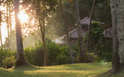 Natürliches Morgensonnenlicht Stockbild